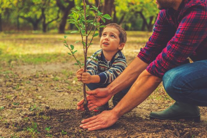 adult and small child planting a sapling
