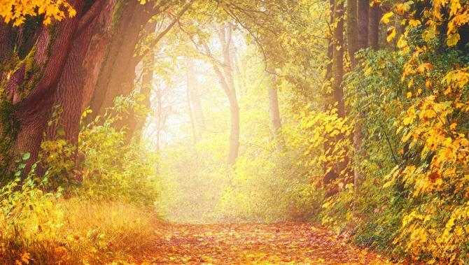 autumn forest with warm sunlit glow