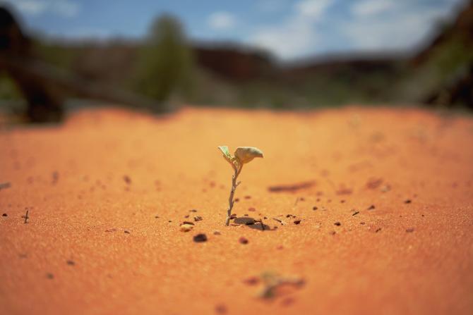 seedling sprouting in desert soil